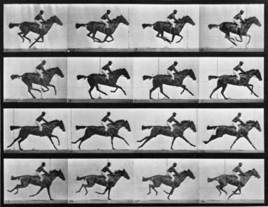 Muybridge_Animal-Locomotion-Plate-626_1000_c95375ca-2a6e-49c5-9fa9-9dca6d64fab9_1024x1024_grande